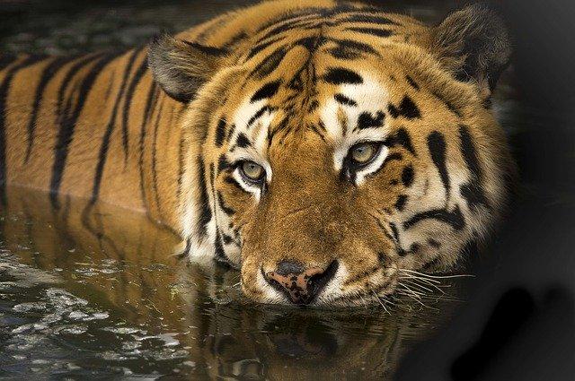 Cara Melakukan Lompat Harimau