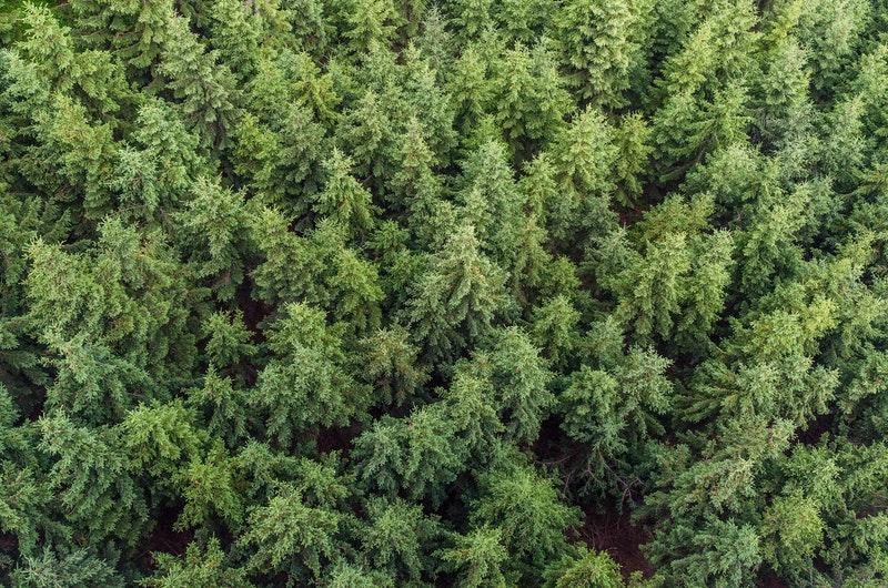 Tersesat di hutan liar