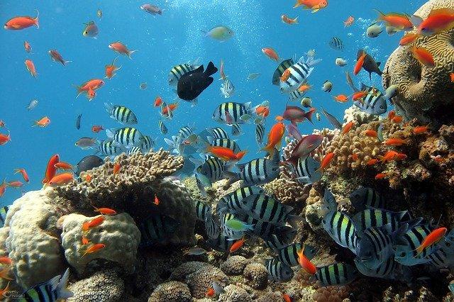 Ikan Yang Baik Untuk Penderita Asam Urat Sekaligus Sebagai Obat Alami