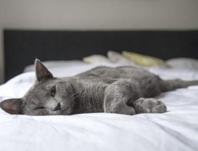 Bagaimana Cara Mengatasi Kucing Stres Karena Pindah Rumah yang Benar?