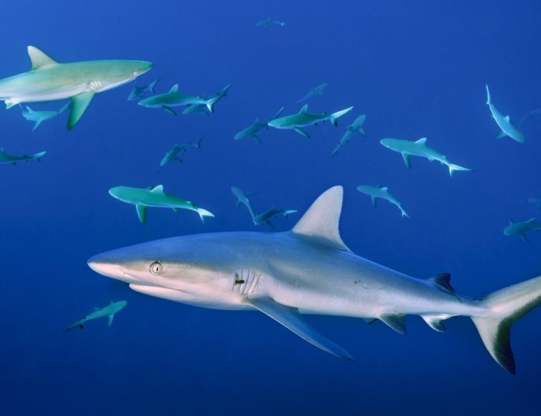 Surprising Facts about Sharks