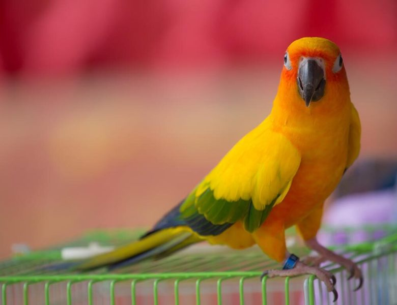 Top Peaceful Household Pet Bird Types